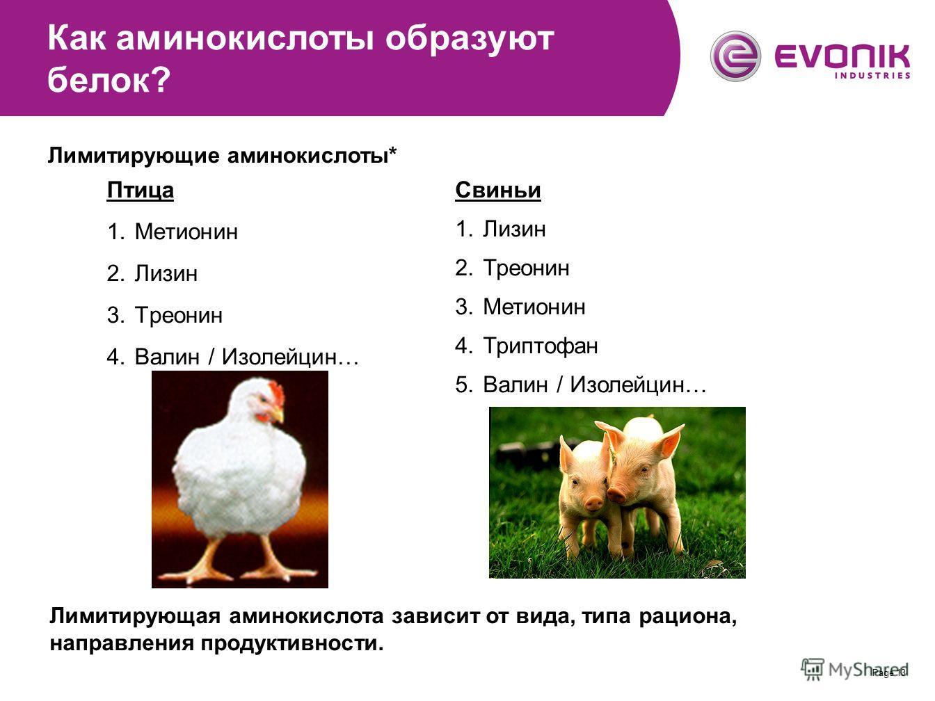 Page 13 Птица 1.Метионин 2.Лизин 3.Треонин 4. Валин / Изолейцин… Свиньи 1.Лизин 2.Треонин 3.Метионин 4.Триптофан 5.Валин / Изолейцин… Как аминокислоты образуют белок? Лимитирующие аминокислоты* Лимитирующая аминокислота зависит от вида, типа рациона,