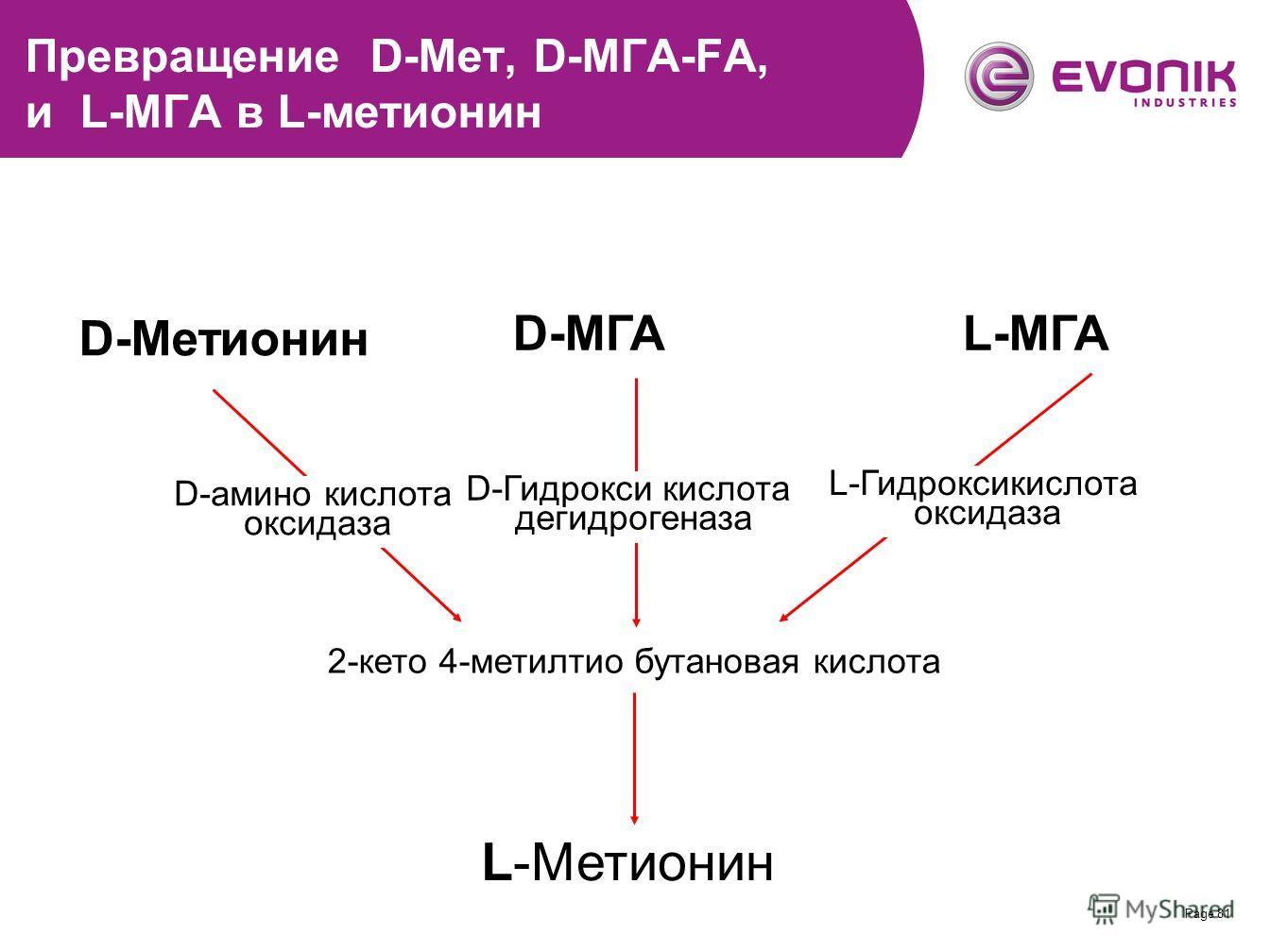 Page 81 Превращение D-Мет, D-МГА-FA, и L-МГА в L-метионин D-Метионин D-МГАL-МГА D-амино кислота оксидаза D-Гидрокси кислота дегидрогеназа L-Гидроксикислота оксидаза L-Метионин 2-кето 4-метилтио бутановая кислота