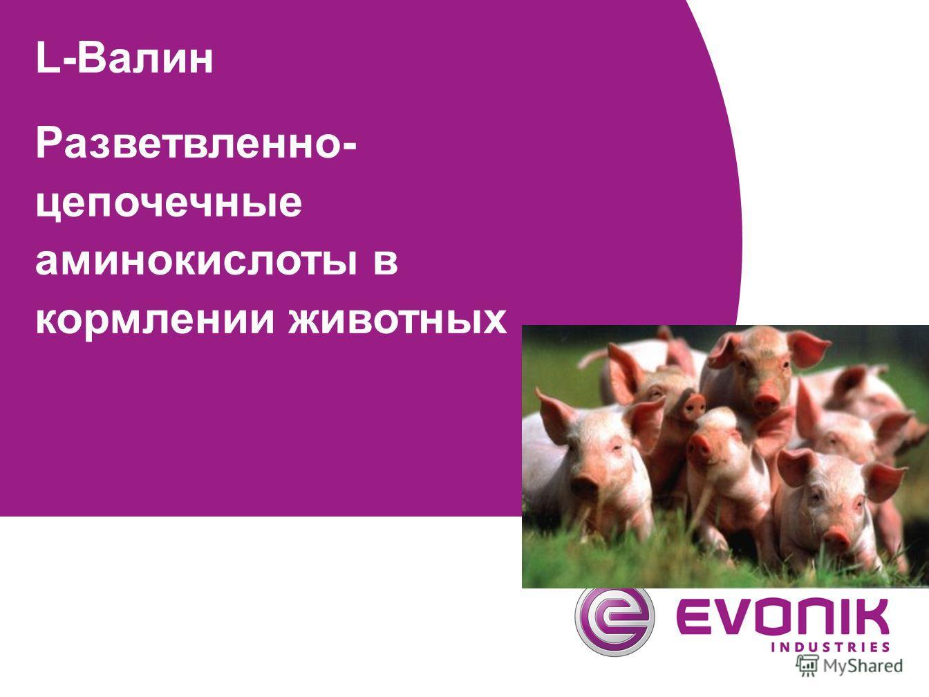 L-Валин Разветвленно- цепочечные аминокислоты в кормлении животных