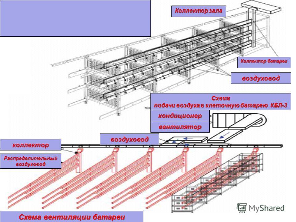 Коллектор зала Коллектор батареи воздуховод вентилятор кондиционер воздуховод Схема подачи воздуха в клеточную батарею КБЛ-3 коллектор Распределительный воздуховод Схема вентиляции батареи