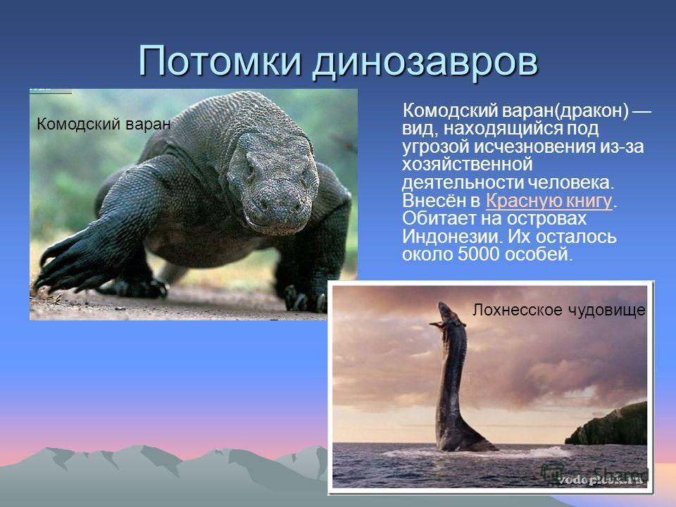 Потомки динозавров Комодский варан(дракон) вид, находящийся под угрозой исчезновения из-за хозяйственной деятельности человека. Внесён в Красную книгу. Обитает на островах Индонезии. Их осталось около 5000 особей.Красную книгу Комодский варан Лохнесс