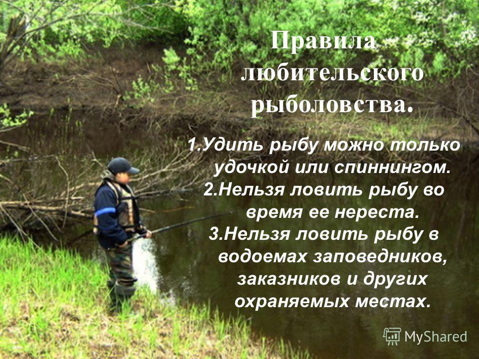 Правила любительского рыболовства. 1.Удить рыбу можно только удочкой или спиннингом. 2.Нельзя ловить рыбу во время ее нереста. 3.Нельзя ловить рыбу в водоемах заповедников, заказников и других охраняемых местах.