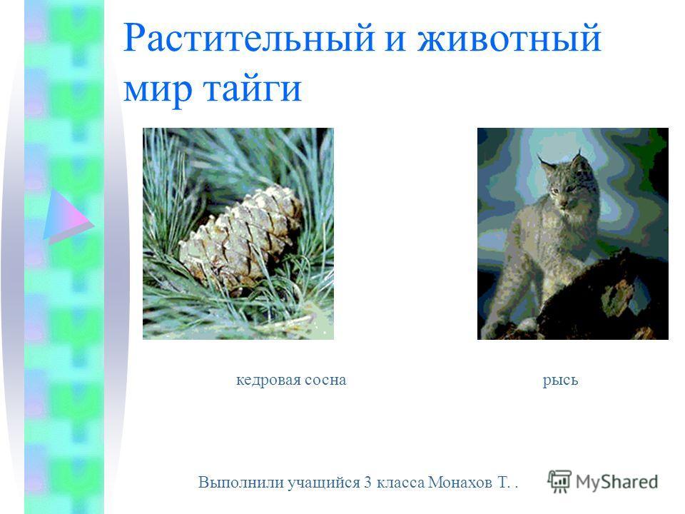 Растительный и животный мир тайги кедровая сосна рысь Выполнили учащийся 3 класса Монахов Т..