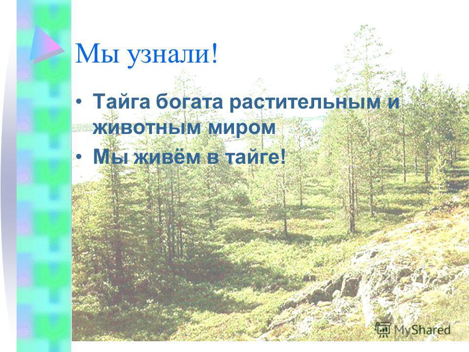 Мы узнали! Тайга богата растительным и животным миром Мы живём в тайге!
