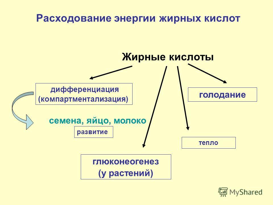 Жирные кислоты дифференциация (компартментализация) голодание семена, яйцо, молоко развитие глюконеогенез (у растений) Расходование энергии жирных кислот тепло
