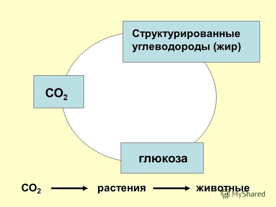 СО 2 глюкоза Структурированные углеводороды (жир) СО 2 растенияживотные