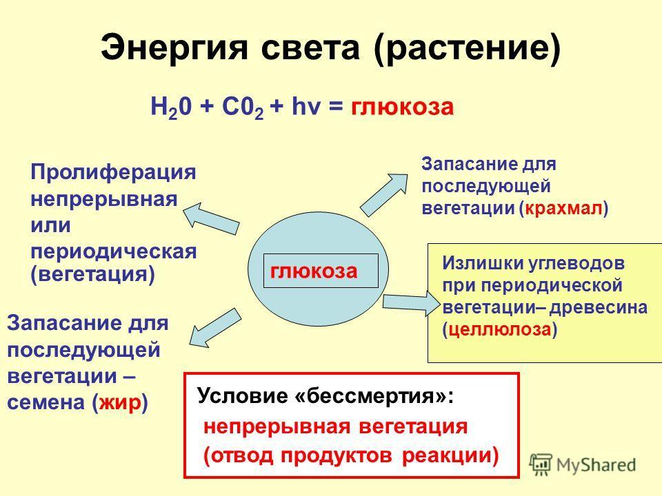 Энергия света (растение) Н 2 0 + С0 2 + hv = глюкоза глюкоза Пролиферация непрерывная или периодическая (вегетация) Запасание для последующей вегетации (крахмал) Запасание для последующей вегетации – семена (жир) Излишки углеводов при периодической в