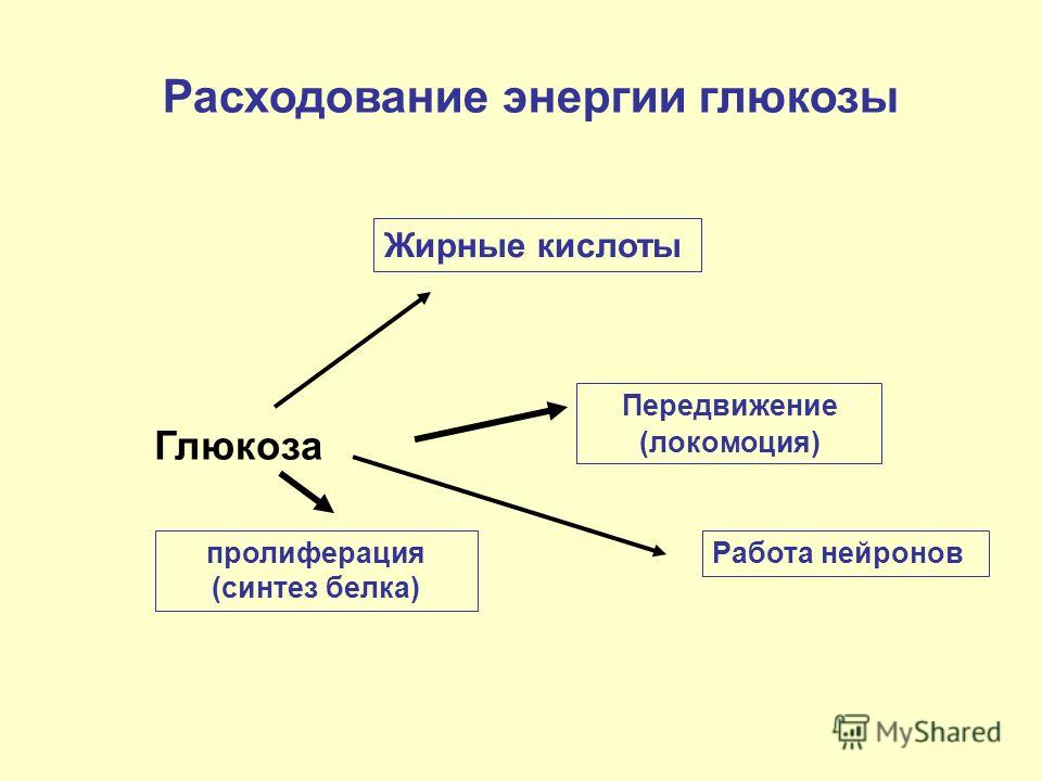 Глюкоза пролиферация (синтез белка) Передвижение (локомоция) Работа нейронов Расходование энергии глюкозы Жирные кислоты