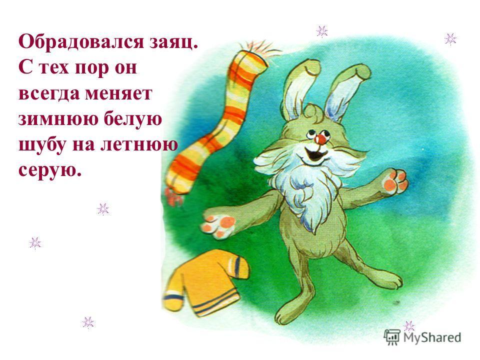 Обрадовался заяц. С тех пор он всегда меняет зимнюю белую шубу на летнюю серую.