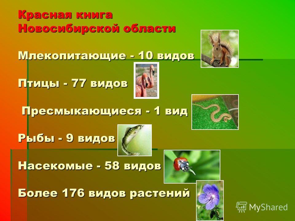Красная книга Новосибирской области Млекопитающие - 10 видов Птицы - 77 видов Пресмыкающиеся - 1 вид Рыбы - 9 видов Насекомые - 58 видов Более 176 видов растений