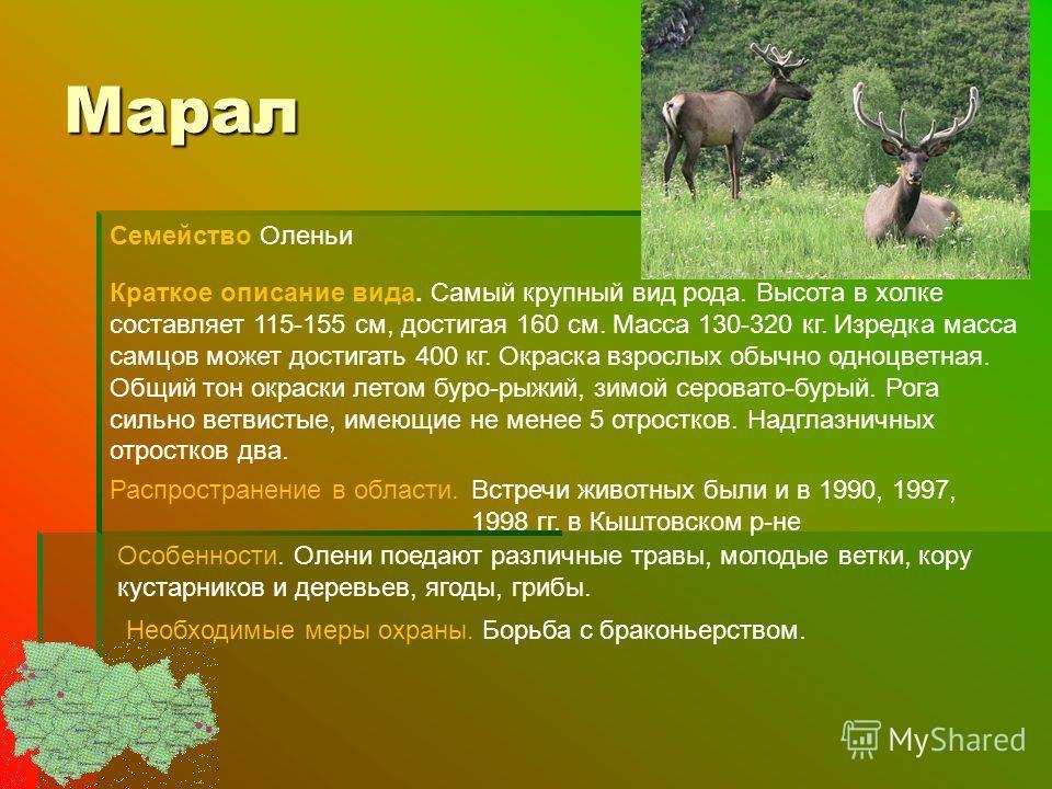 Марал Семейство Оленьи Краткое описание вида. Самый крупный вид рода. Высота в холке составляет 115-155 см, достигая 160 см. Масса 130-320 кг. Изредка масса самцов может достигать 400 кг. Окраска взрослых обычно одноцветная. Общий тон окраски летом б