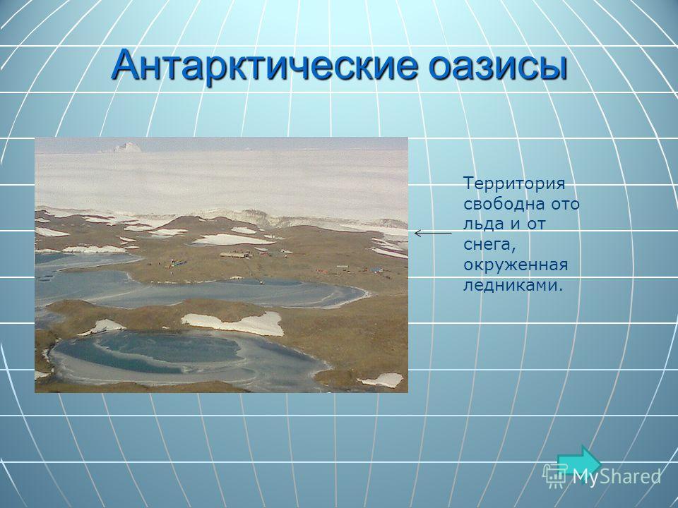 Антарктические оазисы Территория свободна ото льда и от снега, окруженная ледниками.