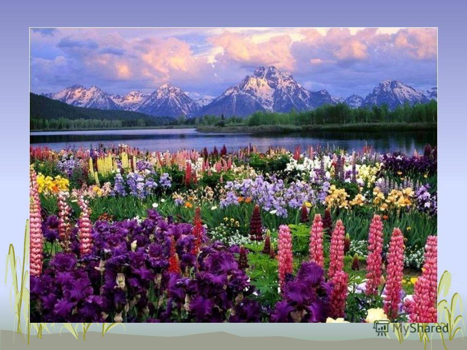 Но разве можно описать красоту? …живёт у нас в сердце… Многие люди пытались это сделать, но лишь немногим это удалось. Ведь красота…