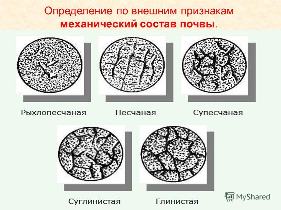 Определение по внешним признакам механический состав почвы.