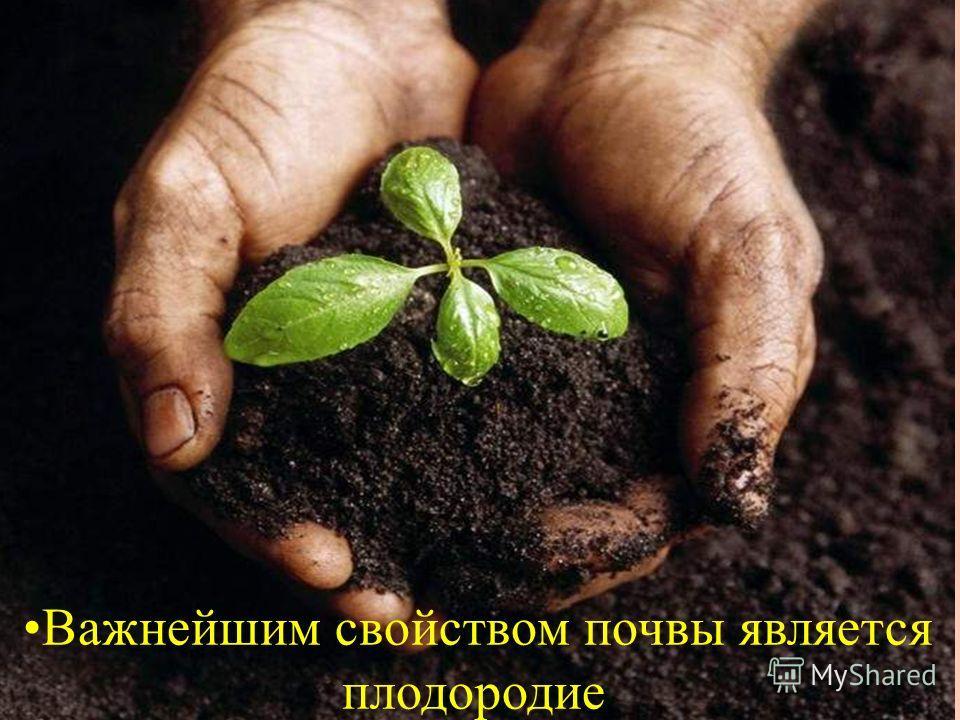 Важнейшим свойством почвы является плодородие.