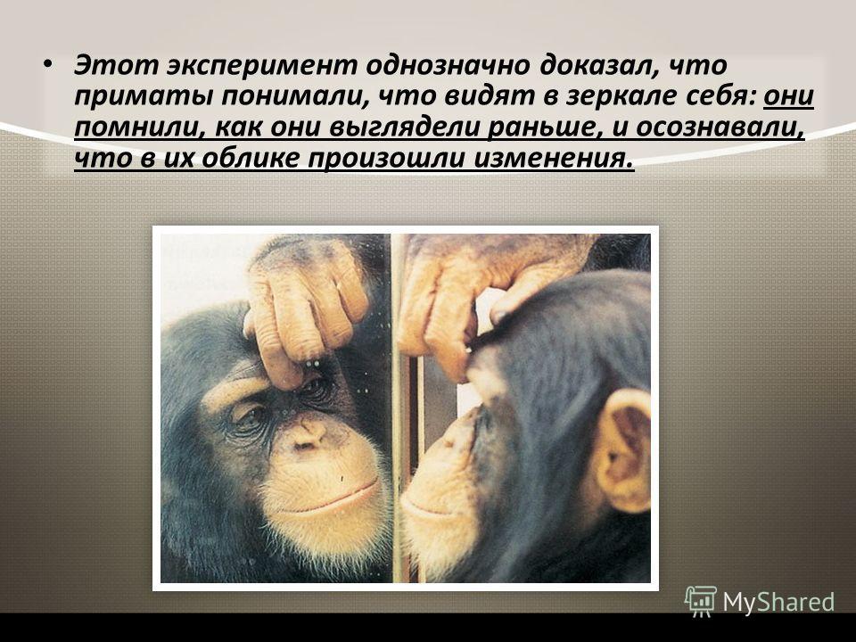 Этот эксперимент однозначно доказал, что приматы понимали, что видят в зеркале себя: они помнили, как они выглядели раньше, и осознавали, что в их облике произошли изменения.