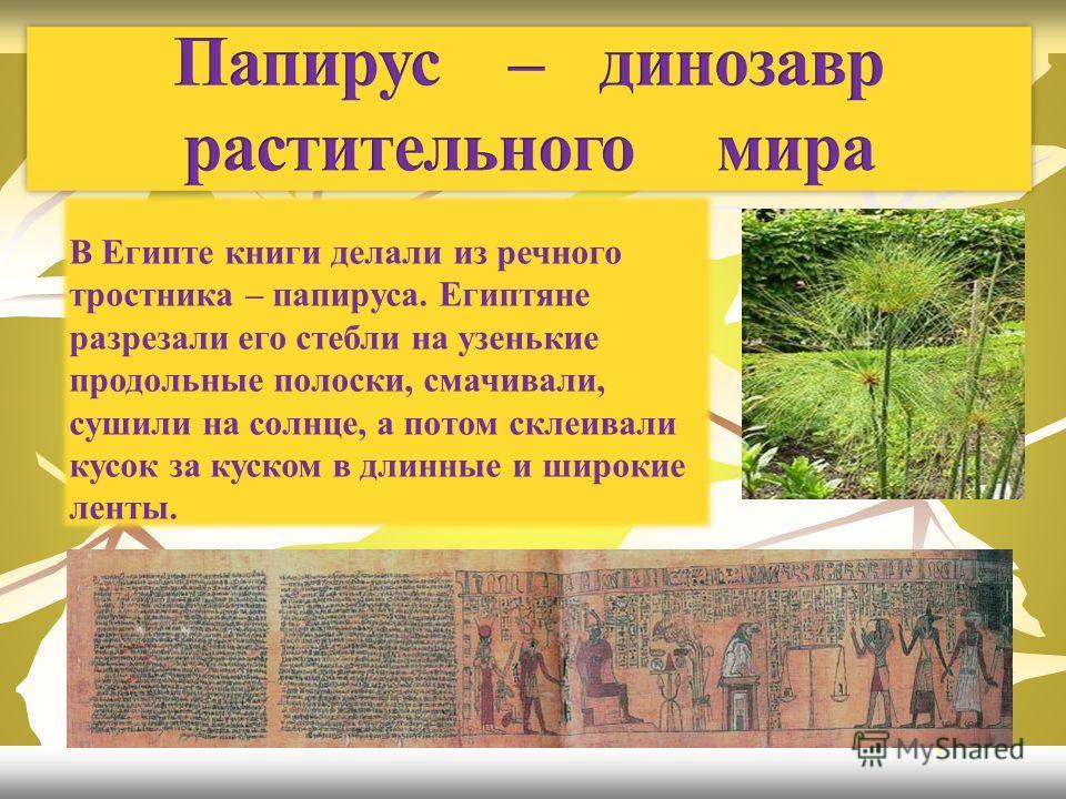 В Египте книги делали из речного тростника – папируса. Египтяне разрезали его стебли на узенькие продольные полоски, смачивали, сушили на солнце, а потом склеивали кусок за куском в длинные и широкие ленты.