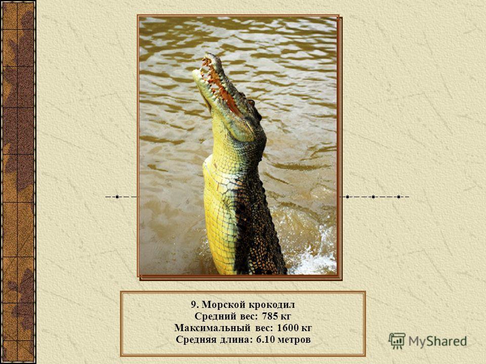 9. Морской крокодил Средний вес: 785 кг Максимальный вес: 1600 кг Средняя длина: 6.10 метров