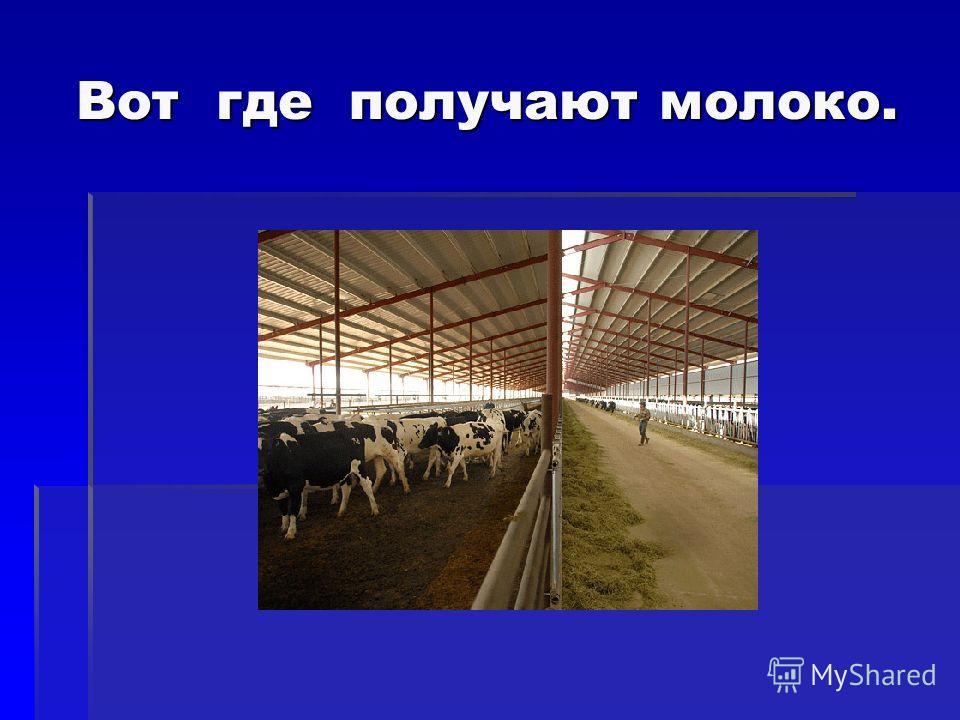 Вот где получают молоко. Вот где получают молоко.