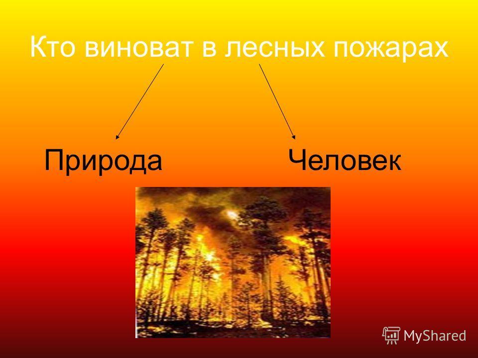 Кто виноват в лесных пожарах ПриродаЧеловек