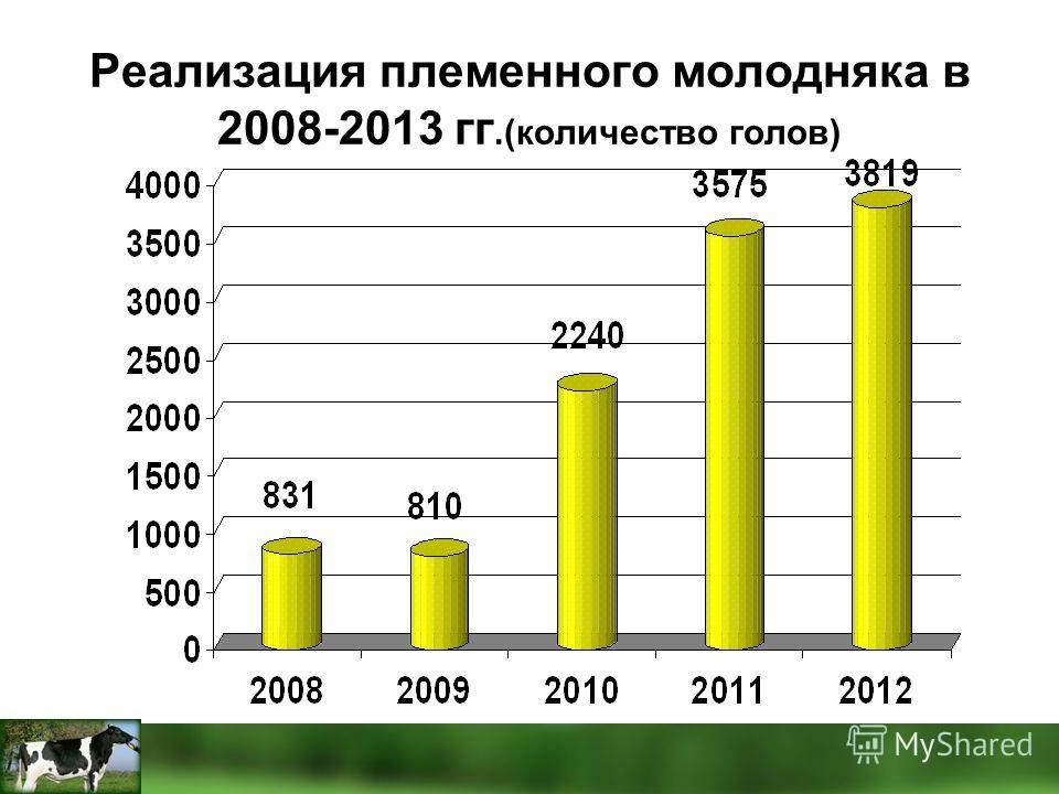 Реализация племенного молодняка в 2008-2013 гг.(количество голов)