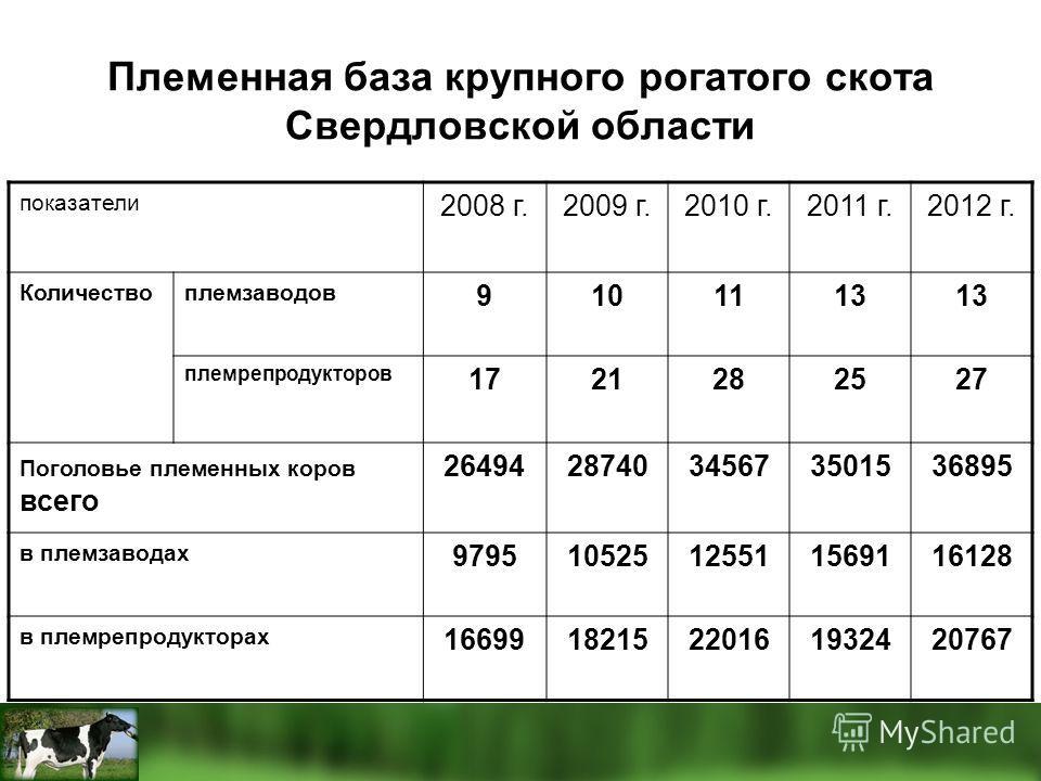 Племенная база крупного рогатого скота Свердловской области показатели 2008 г.2009 г.2010 г.2011 г.2012 г. Количествоплемзаводов 9101113 племрепродукторов 1721282527 Поголовье племенных коров всего 2649428740345673501536895 в племзаводах 979510525125