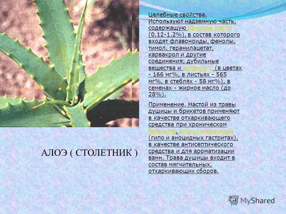 АЛОЭ ( СТОЛЕТНИК ) Целебные свойства. Используют надземную часть, содержащую эфирное масло (0,12-1,2%), в состав которого входят флавоноиды, фенолы, тимол, геранилацетат, карвакрол и другие соединения; дубильные вещества и витамин С (в цветах - 166 м