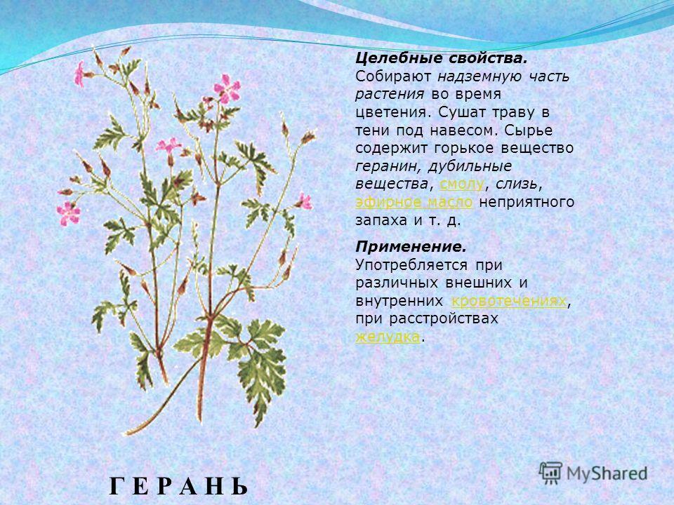 Целебные свойства. Собирают надземную часть растения во время цветения. Сушат траву в тени под навесом. Сырье содержит горькое вещество геранин, дубильные вещества, смолу, слизь, эфирное масло неприятного запаха и т. д.смолу эфирное масло Применение.