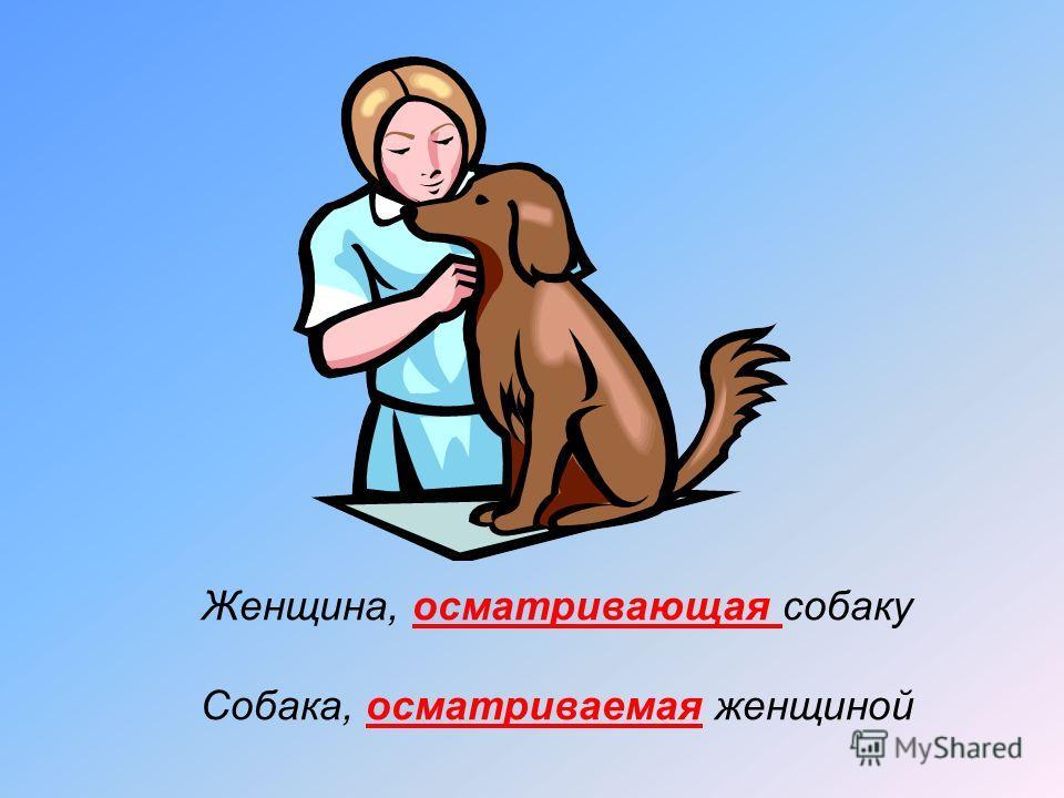 Женщина, осматривающая собаку Собака, осматриваемая женщиной
