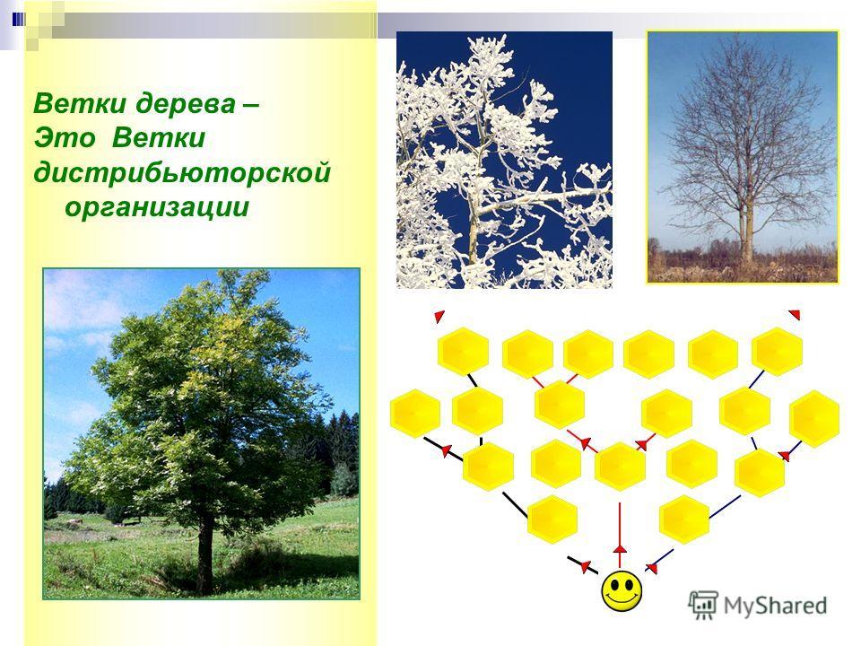 Ветки дерева – Это Ветки дистрибьюторской организации