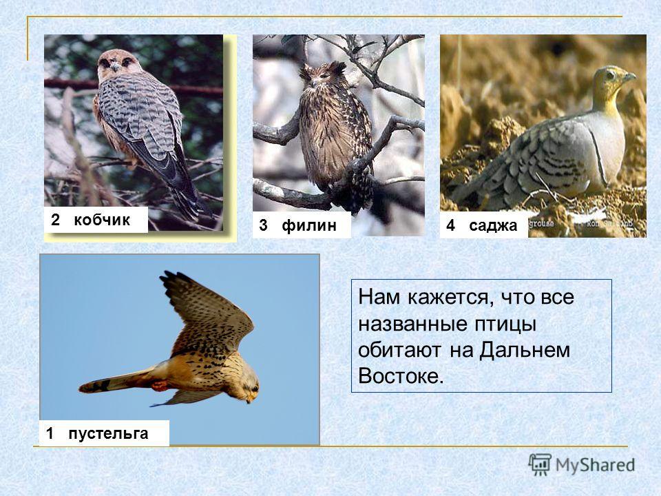 1 пустельга 2 кобчик 3 филин4 саджа Нам кажется, что все названные птицы обитают на Дальнем Востоке.