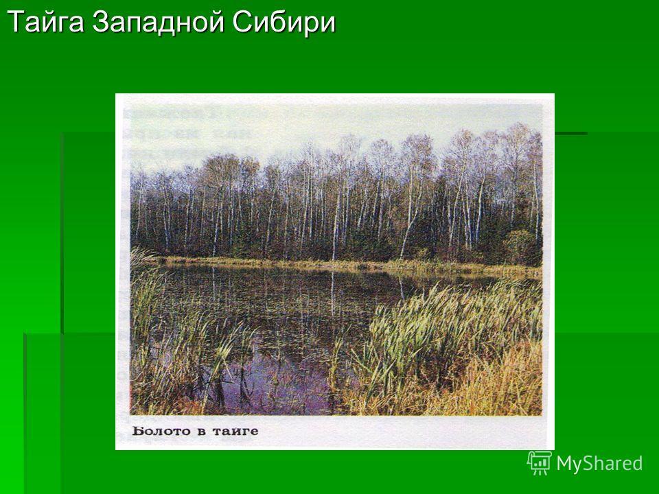 Тайга Западной Сибири
