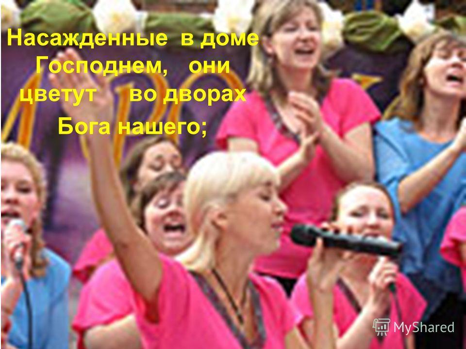 Насажденные в доме Господнем, они цветут во дворах Бога нашего;