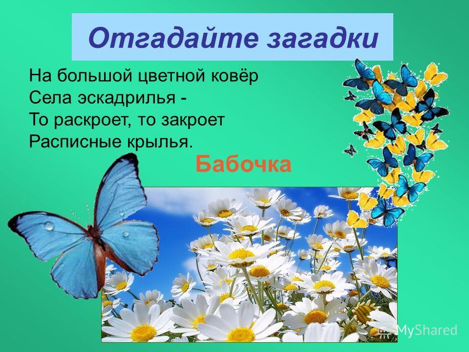 Отгадайте загадки Бабочка На большой цветной ковёр Села эскадрилья - То раскроет, то закроет Расписные крылья.