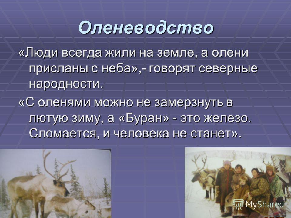 Оленеводство «Люди всегда жили на земле, а олени присланы с неба»,- говорят северные народности. «С оленями можно не замерзнуть в лютую зиму, а «Буран» - это железо. Сломается, и человека не станет».