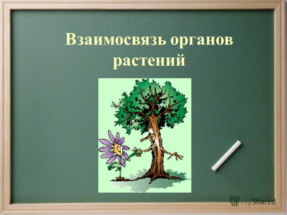 Взаимосвязь органов растений