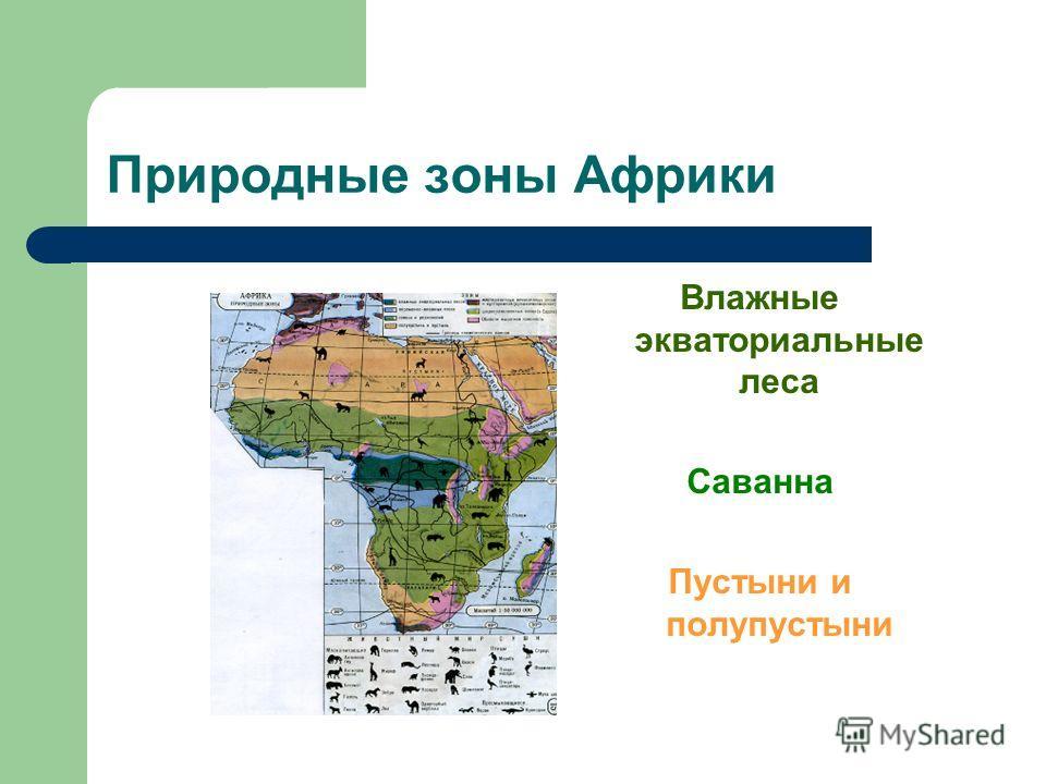 Природные зоны Африки Влажные экваториальные леса Саванна Пустыни и полупустыни