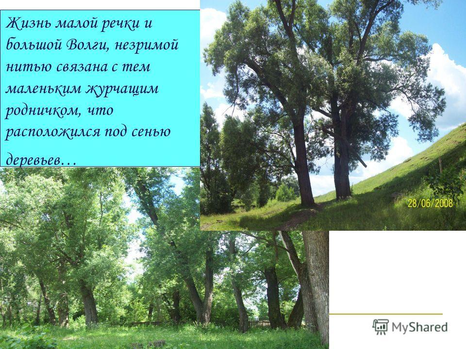 Жизнь малой речки и большой Волги, незримой нитью связана с тем маленьким журчащим родничком, что расположился под сенью деревьев…