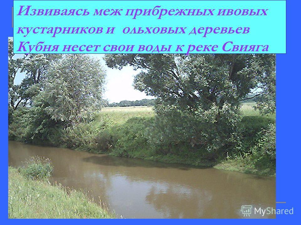 Извиваясь меж прибрежных ивовых кустарников и ольховых деревьев Кубня несет свои воды к реке Свияга
