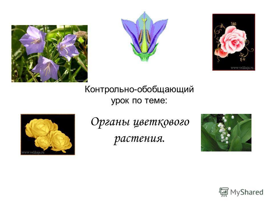 Контрольно-обобщающий урок по теме: Органы цветкового растения.