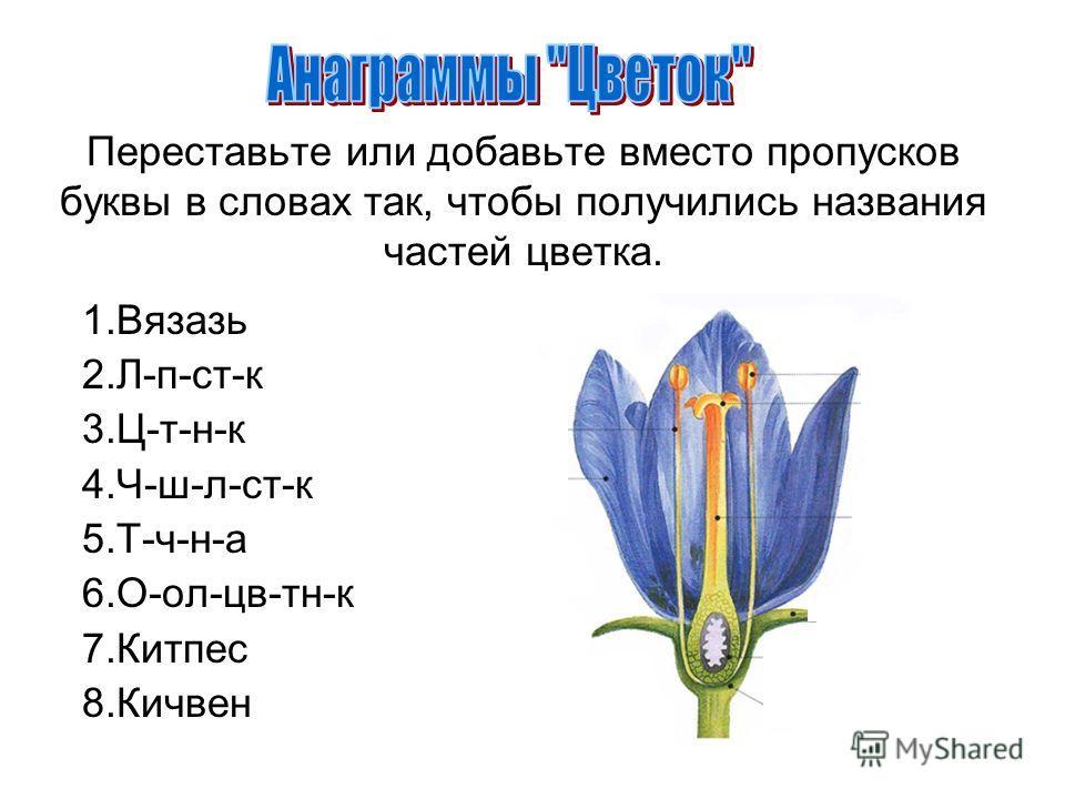 Переставьте или добавьте вместо пропусков буквы в словах так, чтобы получились названия частей цветка. 1.Вязазь 2.Л-п-ст-к 3.Ц-т-н-к 4.Ч-ш-л-ст-к 5.Т-ч-н-а 6.О-ол-цв-тн-к 7.Китпес 8.Кичвен