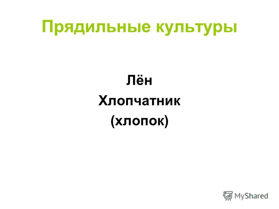 Прядильные культуры Лён Хлопчатник (хлопок)