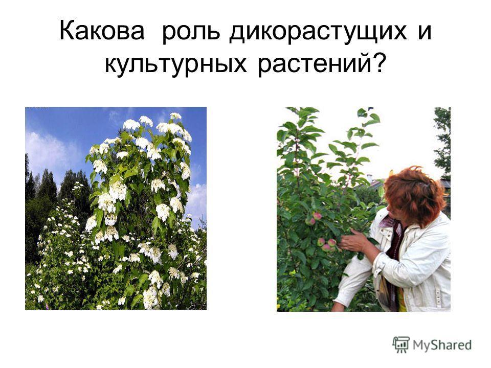 Какова роль дикорастущих и культурных растений?