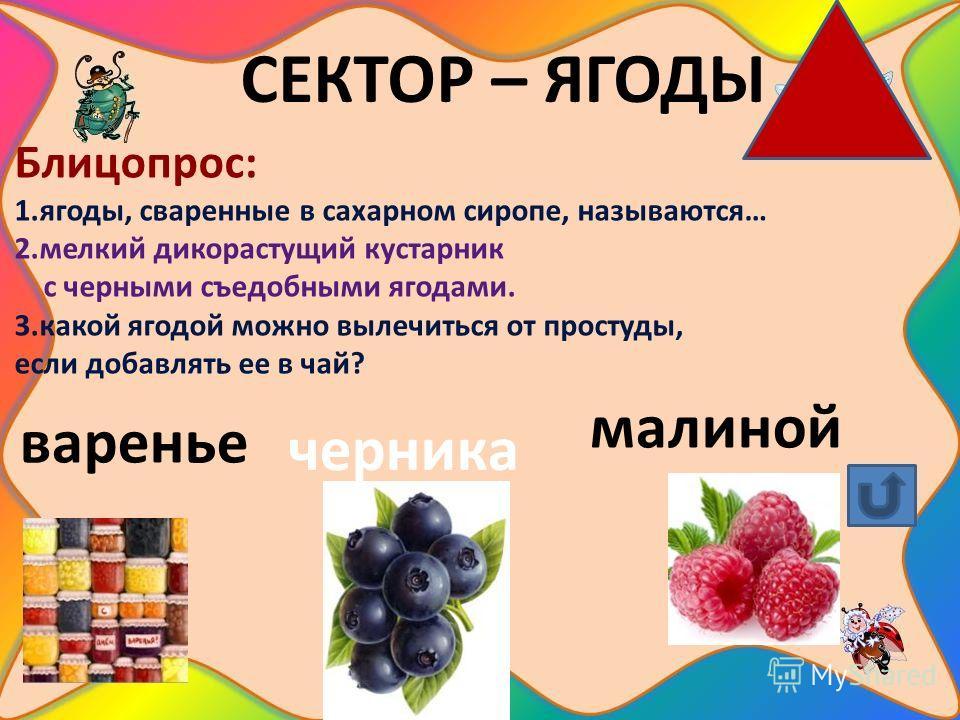 СЕКТОР – ЯГОДЫ Блицопрос: 1.ягоды, сваренные в сахарном сиропе, называются… 2.мелкий дикорастущий кустарник с черными съедобными ягодами. 3.какой ягодой можно вылечиться от простуды, если добавлять ее в чай? варенье черника малиной