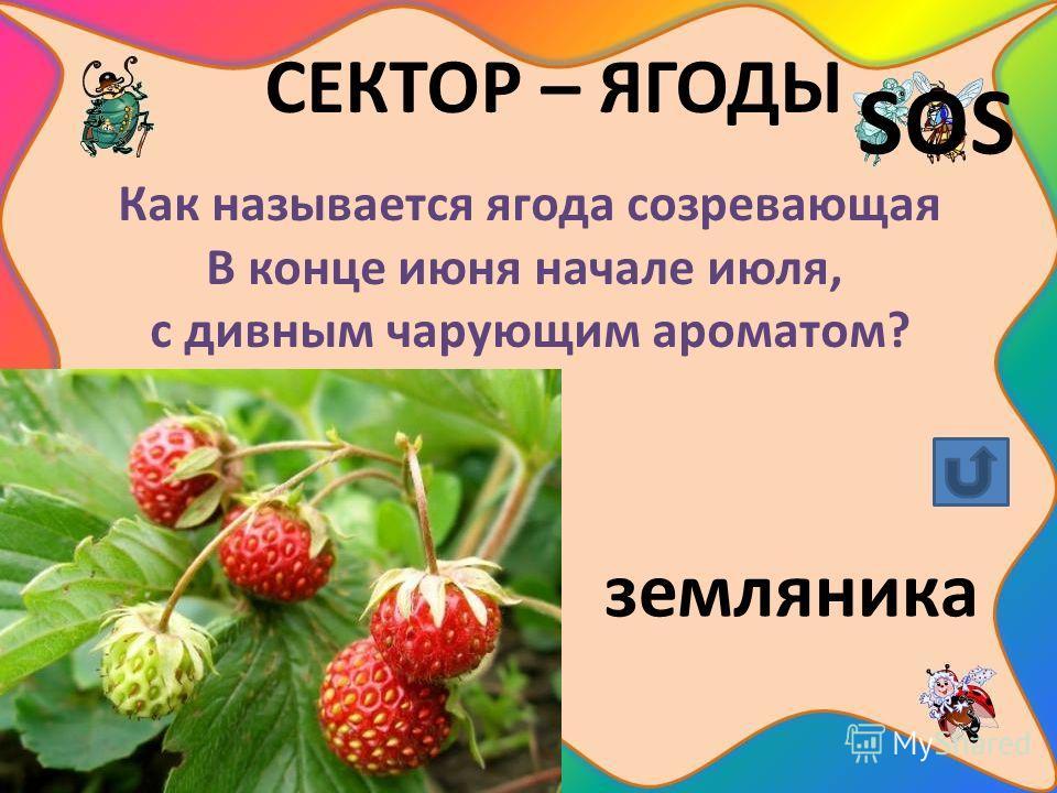 СЕКТОР – ЯГОДЫ SOS Как называется ягода созревающая В конце июня начале июля, с дивным чарующим ароматом? земляника