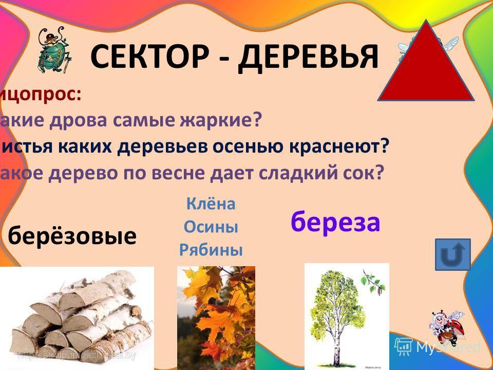 СЕКТОР - ДЕРЕВЬЯ Блицопрос: 1.Какие дрова самые жаркие? 2.Листья каких деревьев осенью краснеют? 3.Какое дерево по весне дает сладкий сок? берёзовые Клёна Осины Рябины береза
