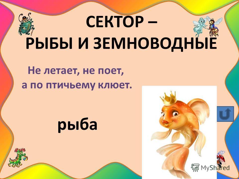 СЕКТОР – РЫБЫ И ЗЕМНОВОДНЫЕ Не летает, не поет, а по птичьему клюет. рыба
