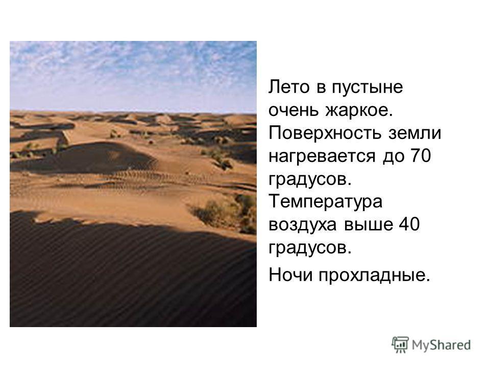Лето в пустыне очень жаркое. Поверхность земли нагревается до 70 градусов. Температура воздуха выше 40 градусов. Ночи прохладные.