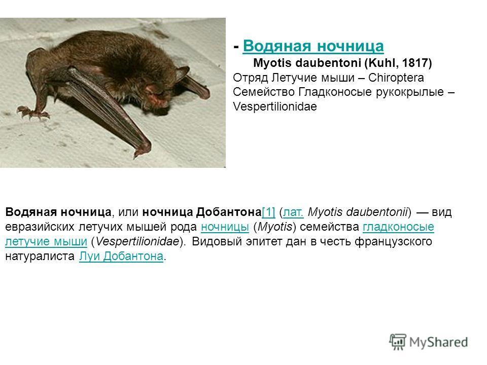 Водяная ночница, или ночница Добантона[1] (лат. Myotis daubentonii) вид евразийских летучих мышей рода ночницы (Myotis) семейства гладконосые летучие мыши (Vespertilionidae). Видовый эпитет дан в честь французского натуралиста Луи Добантона.[1]лат.но