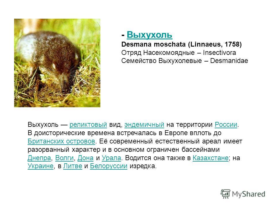 Выхухоль реликтовый вид, эндемичный на территории России. В доисторические времена встречалась в Европе вплоть до Британских островов. Её современный естественный ареал имеет разорванный характер и в основном ограничен бассейнами Днепра, Волги, Дона